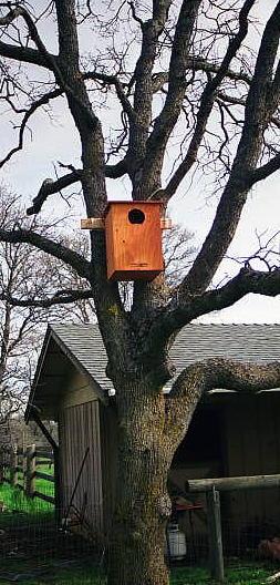 Tree Box5.jpg